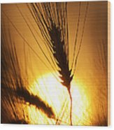 Wheat At Sunset Silhouette Wood Print