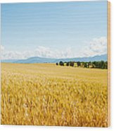 Wheat Field Near D8, Brunet, Plateau De Wood Print
