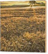 Wheat Fields Of Switzerland Wood Print