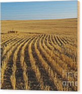 Wheat Rows Wood Print