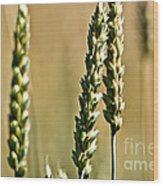 Wheat Stalks Wood Print
