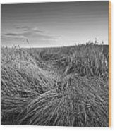 Wheat Waves Wood Print