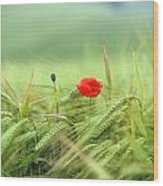 Wheatfield Poppy Wood Print
