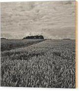 Wheatfields Wood Print