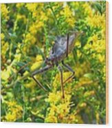 Wheel Bug  Wood Print