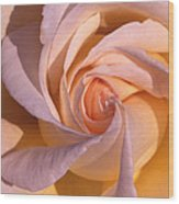 Wheel Rose   Wood Print by Etti PALITZ