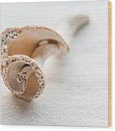 Whelk Shell New Jersey Beach Wood Print