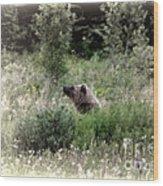 When Bears Dream Wood Print