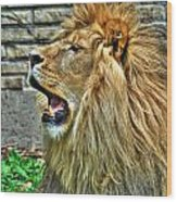 When He Speaks...they Listen...lazy Boy At The Buffalo Zoo Wood Print