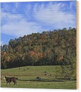 When The Cows Come Home-alabama Wood Print