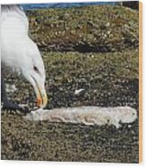 Where Did The Seagull Get The Fillet Wood Print