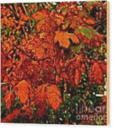 Where Has All The Red Gone - Autumn Leaves - Orange Wood Print