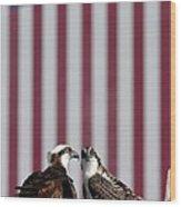 Where Ospreys Dare Wood Print