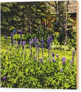 Where The Lupines Grow Wood Print