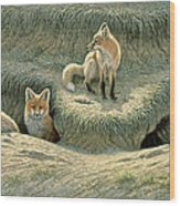 Where's Mom-fox Pups Wood Print by Paul Krapf