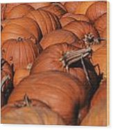 Which One Is The Great Pumpkin Wood Print