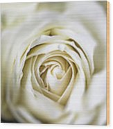 Whie Rose Softly Wood Print