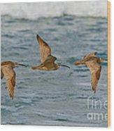 Whimbrel Trio In Flight Wood Print