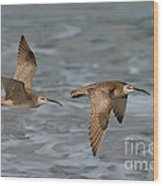 Whimbrels Flying Above Beach Wood Print