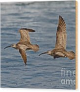 Whimbrels Flying Close Wood Print