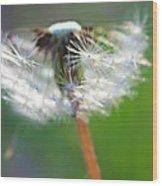 Whimsy Dandelion Wood Print