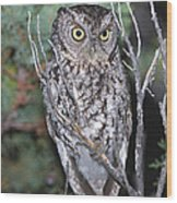 Whiskered Screech Owl Wood Print