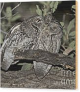 Whiskered Screech Owls Wood Print