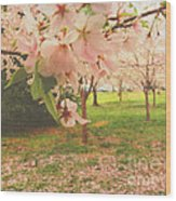 Whispering Cherry Blossoms Wood Print