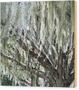 Whispering Oaks Wood Print