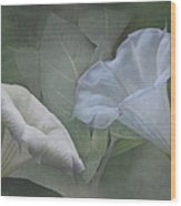 Whispers Of Angel Trumpet Datura Wood Print by Angie Vogel