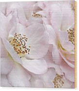 Whispers Of Pink Roses Wood Print
