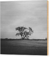 Whistles In Wind  Wood Print