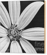 White And Black Flower Close Up Wood Print
