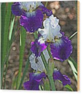 White And Blue Iris Stalks At Boyce Thompson Arboretum Wood Print