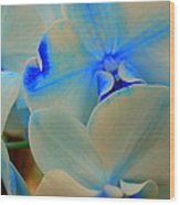 White And Blue Orchid Wood Print