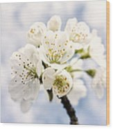 White And Bright - Beautiful Blossoms Wood Print