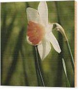 White And Orange Daffodil Wood Print