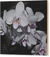White And Pale Pink Phalaenopsis  165 Wood Print