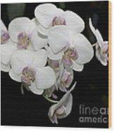 White And Pale Pink Phalaenopsis   9920 Wood Print