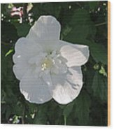 White And Pure Rose Of Sharon Wood Print