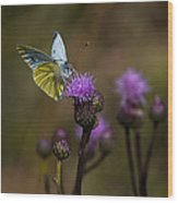 White And Yellow Butterfly On Thistl Wood Print