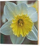 White And Yellow Daffodil Wood Print