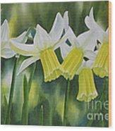 White And Yellow Daffodils Wood Print