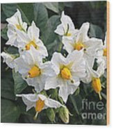 Garden Blossoms White And Yellow Garden Blossoms Wood Print