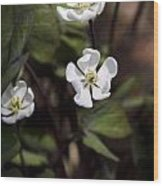 White Anemone Flowers Wood Print