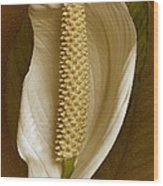White Anthurium Flower Wood Print