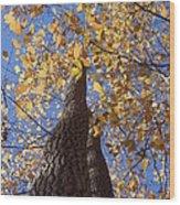 White Ash Wood Print
