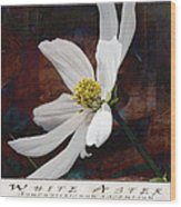 White Aster Study Iv - Titled Wood Print