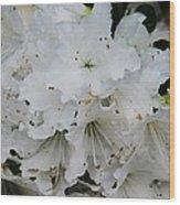White Azaleas In Bermuda Wood Print