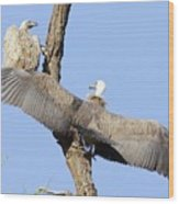 White-backed Vultures Wood Print